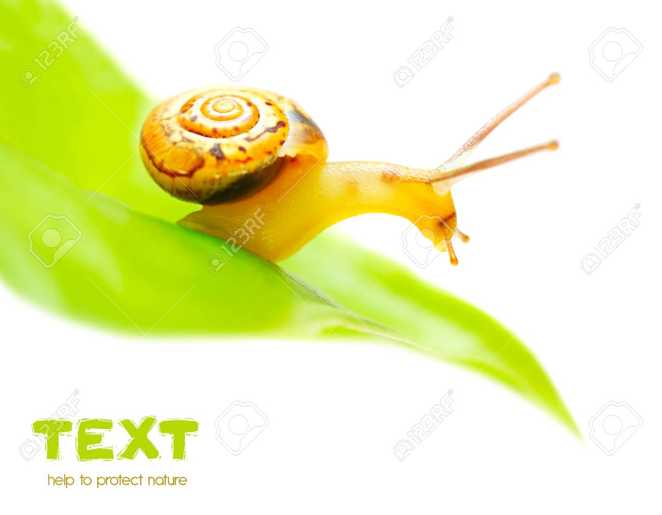 Little snail on the green leaf, macro, isolated on white background Stock Photo - 10082366