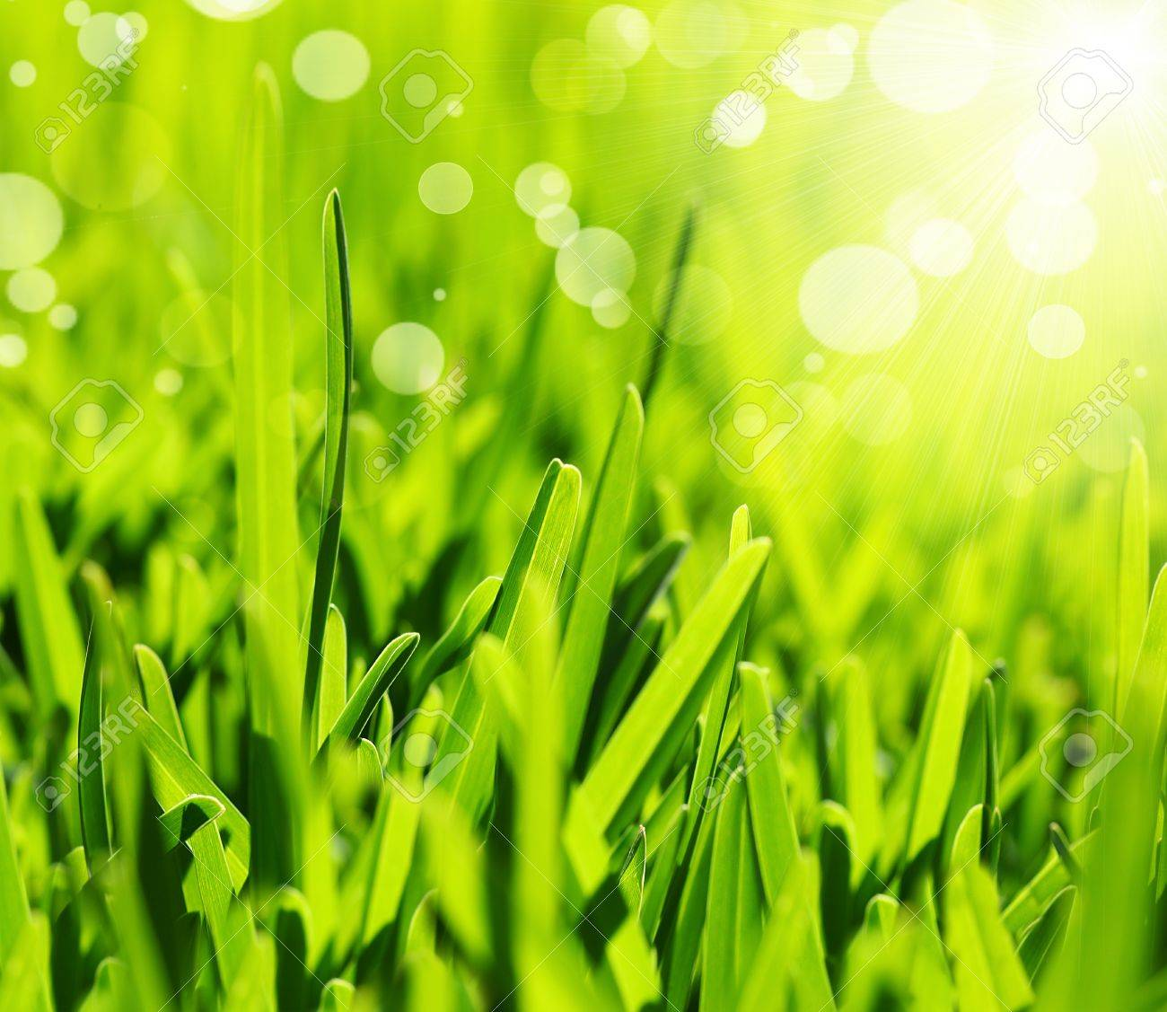 Background Dew Drops On Bright Green Stock Photo 408189892 ...