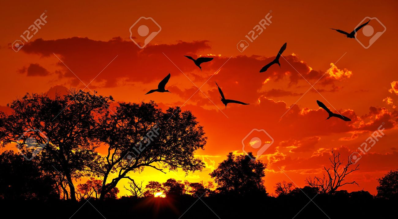 Landscape of Africa with warm sunset, beautiful nature, dramatic red sky, silhouettes of big Ibis birds, wildlife safari, Eco travel and tourism, South Africa, Kruger national park, Sabi Sand Stock Photo - 11312604