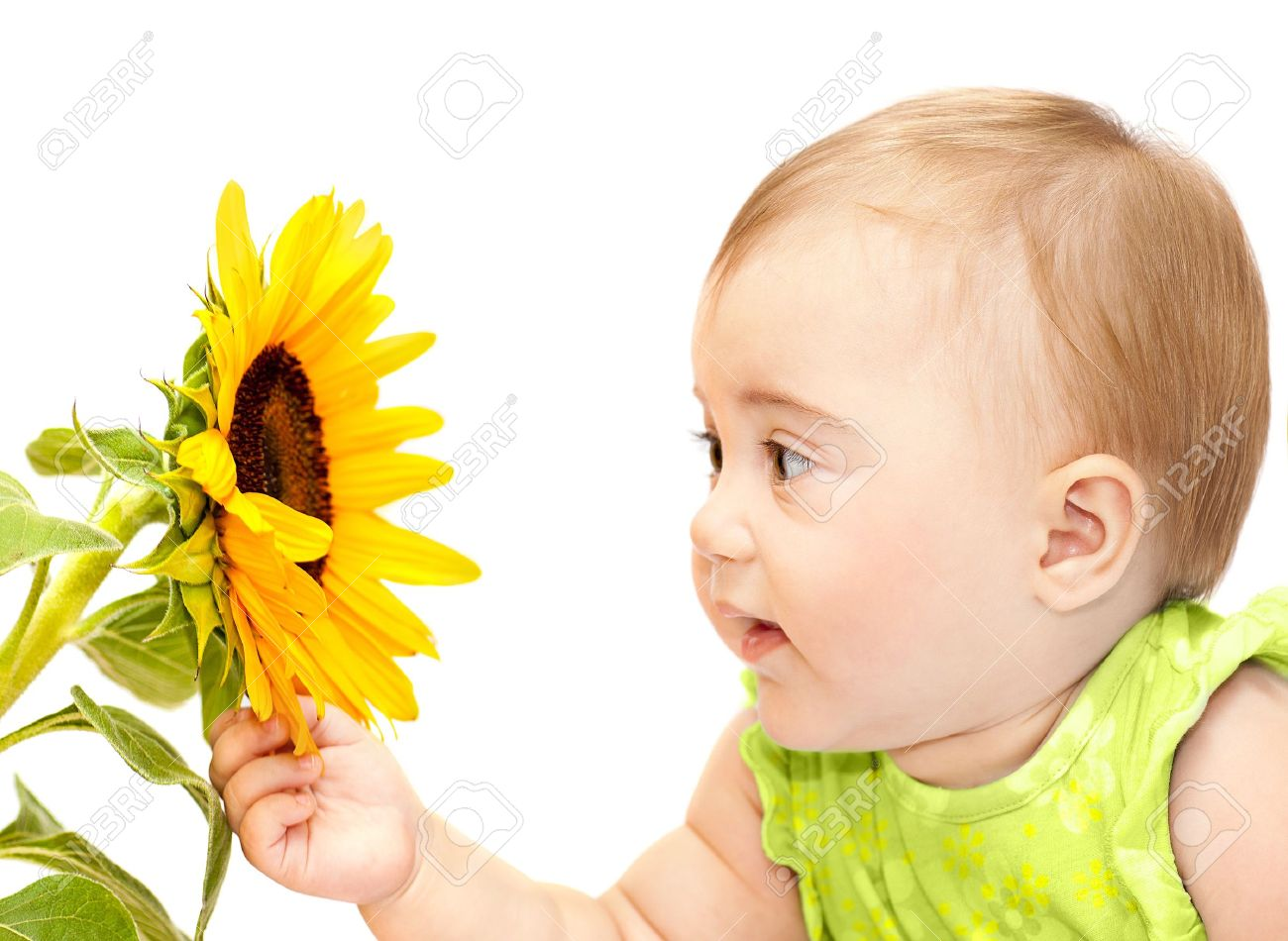 baby girl exploring flower, elementary study of nature, cute.. stock