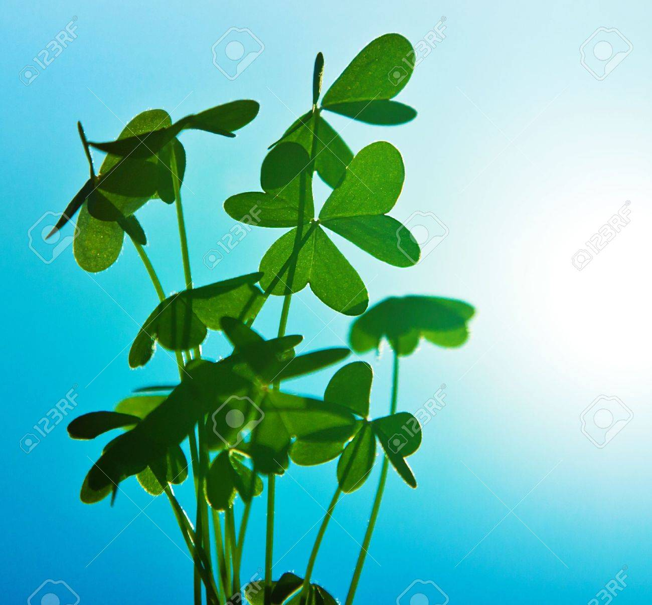 Clover at blue sky, green fresh shamrock plant, natural background, abstract floral image, spring nature Stock Photo - 12589240