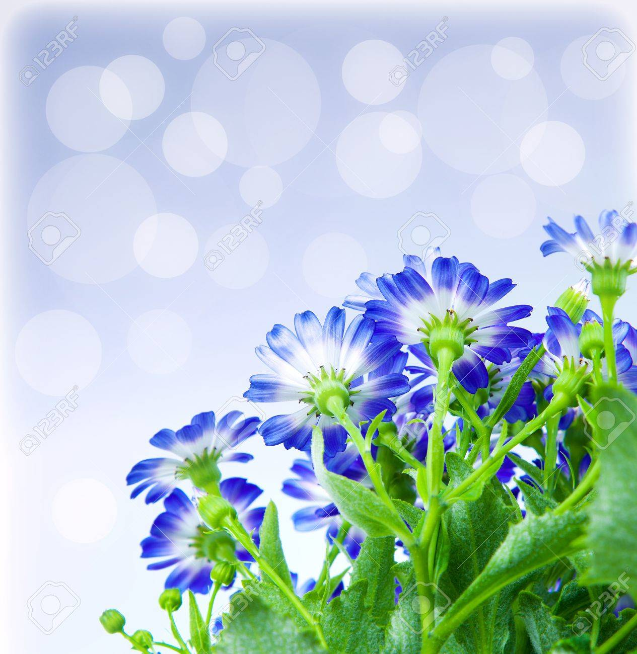 Floral Border, Fresh Spring Blue Blooming Flowers Over Abstract ...