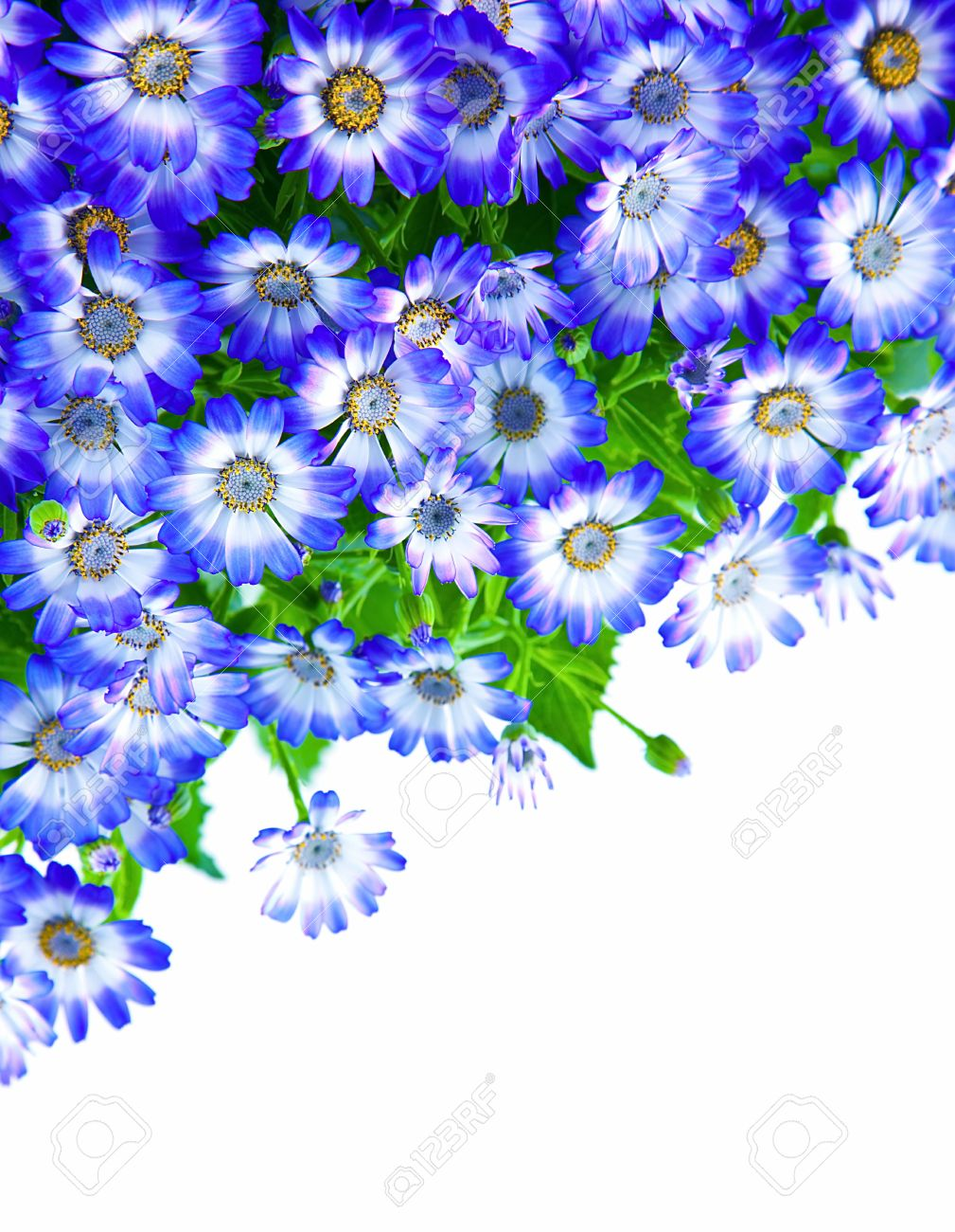 Floral Border, Fresh Spring Blue Blooming Flowers Over White.. Stock ...