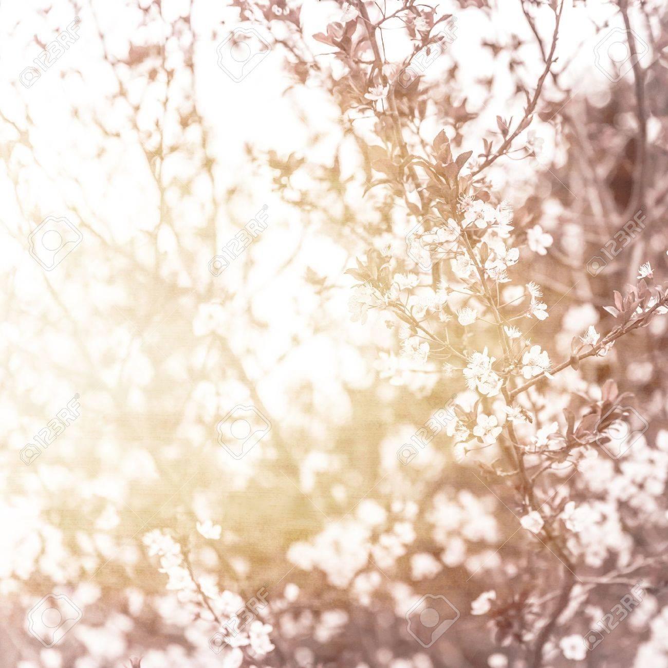美しい桜 抽象的な背景が自然 美術 写真春の木の枝に小さな白い花の