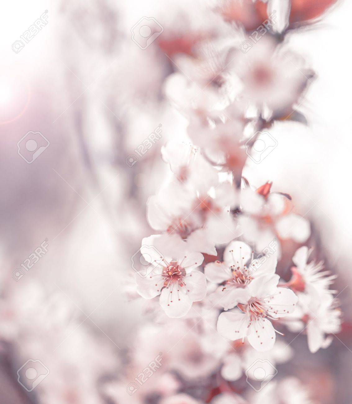 イメージの美しい桜 抽象的な背景が自然 美術 春の木の枝に小さな