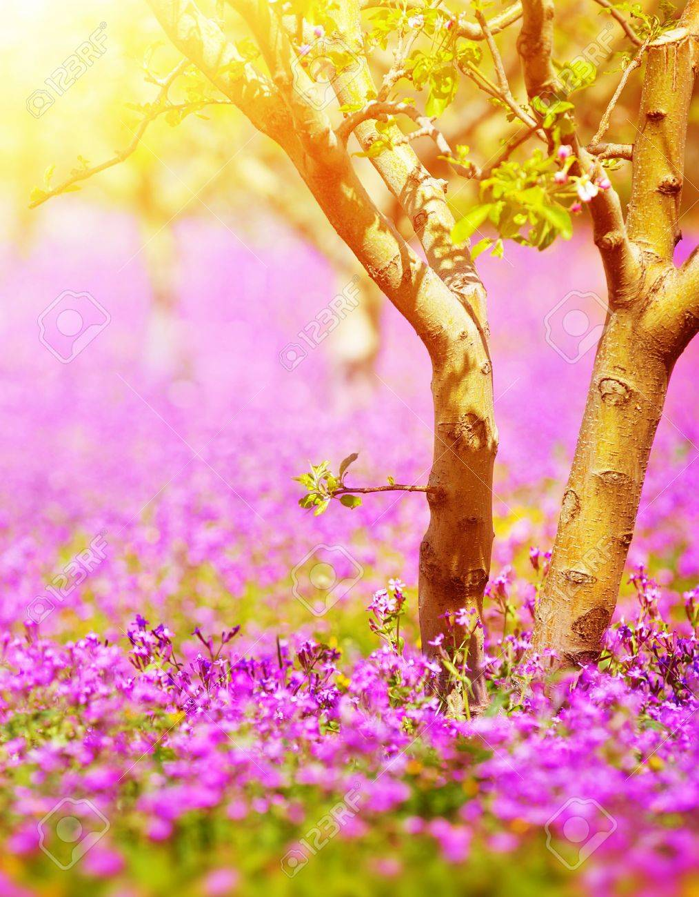 Beau Jardin Ensoleille Avec Des Arbres Fruitiers Et De Fleurs