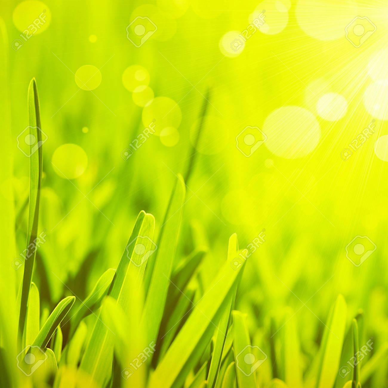 Bright Spring Grass Field Sunlight Bokeh Stock Photo 386764843 ...