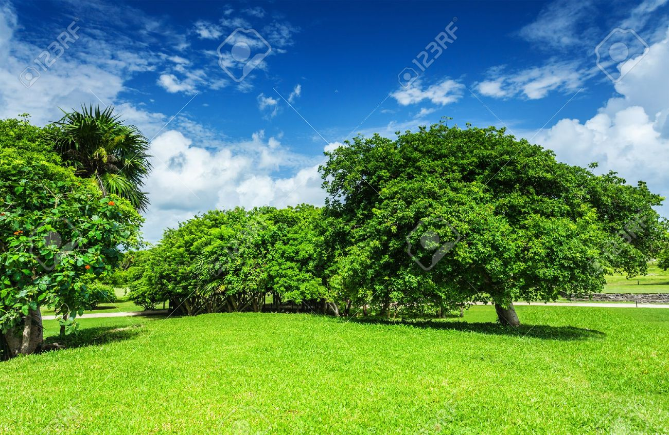 Beautiful landscape, blue cloudy sky, green grass field, leafy trees, sunny  day - Beautiful Landscape, Blue Cloudy Sky, Green Grass Field, Leafy