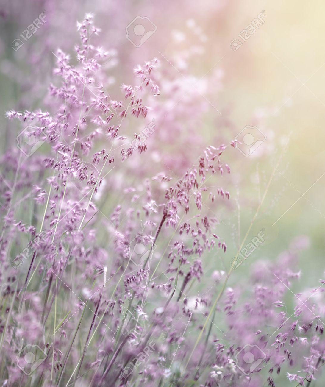 Light Purple Flowers Background 64849 Loadtve