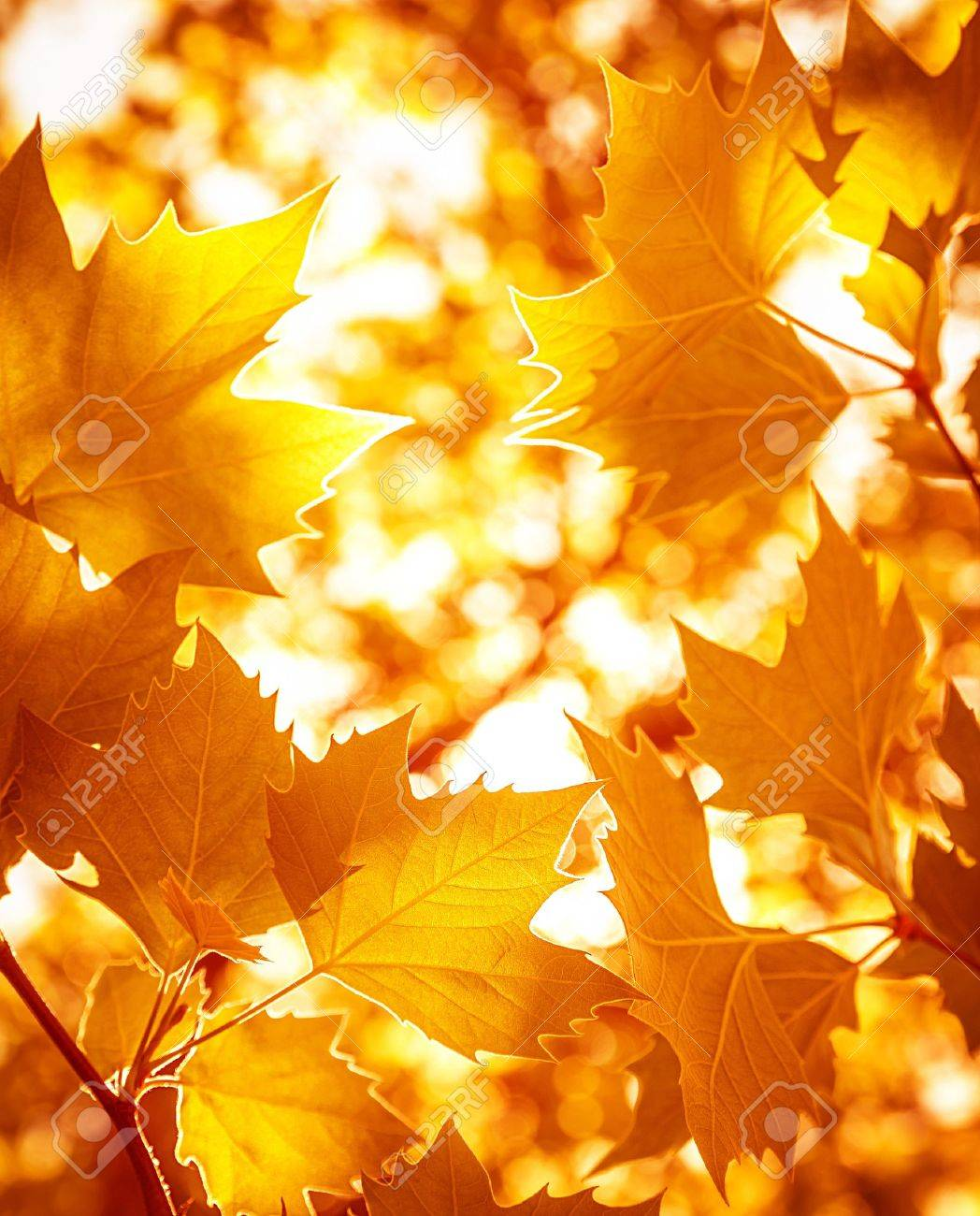 autumn leaves stock photos u0026 pictures royalty free autumn leaves