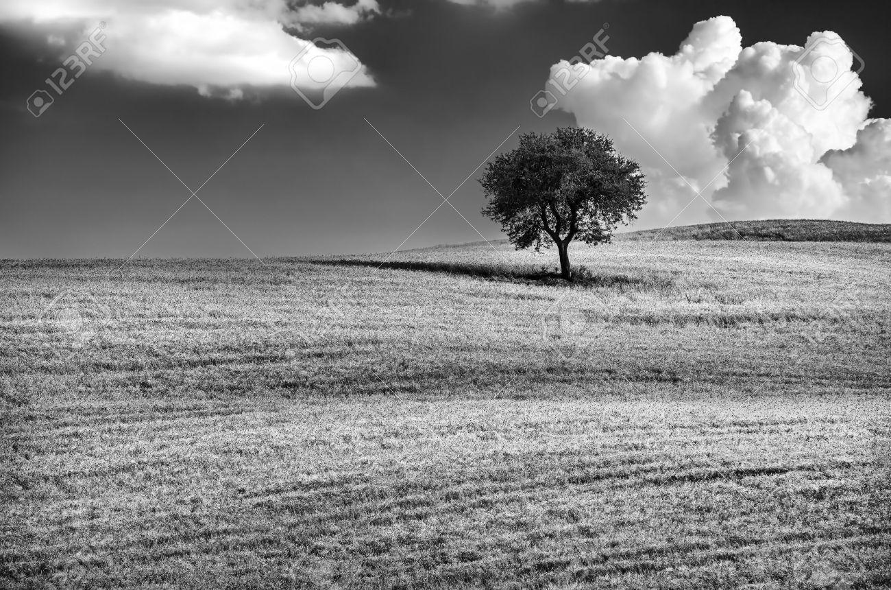 Fabuleux Paysage Noir Et Blanc Banque D'Images, Vecteurs Et Illustrations  SN57