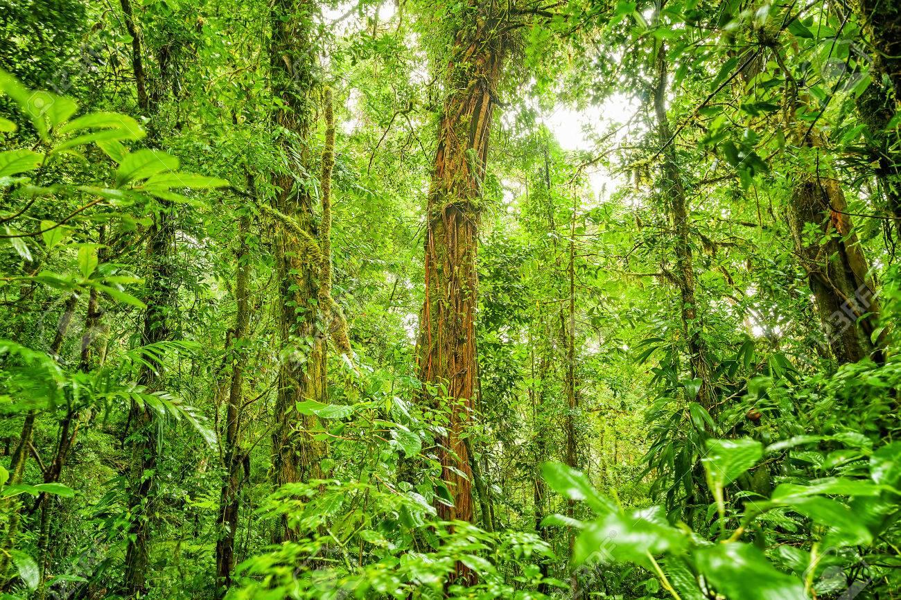 Rein Forest Background Fresh Green Jungle Natural Landscape