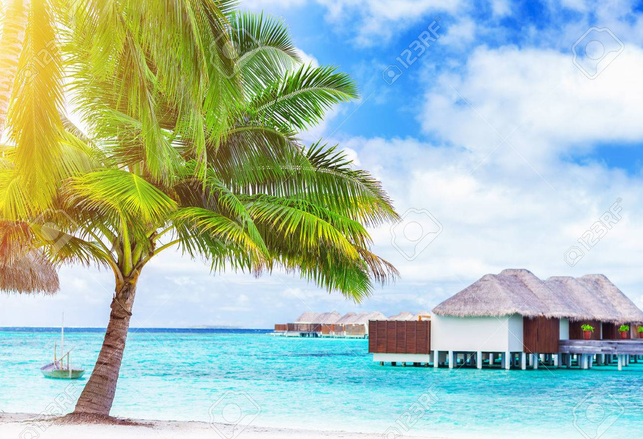 Paradise Beach Landscape Luxury Hotel On An Island Fresh Big Palm Tree The