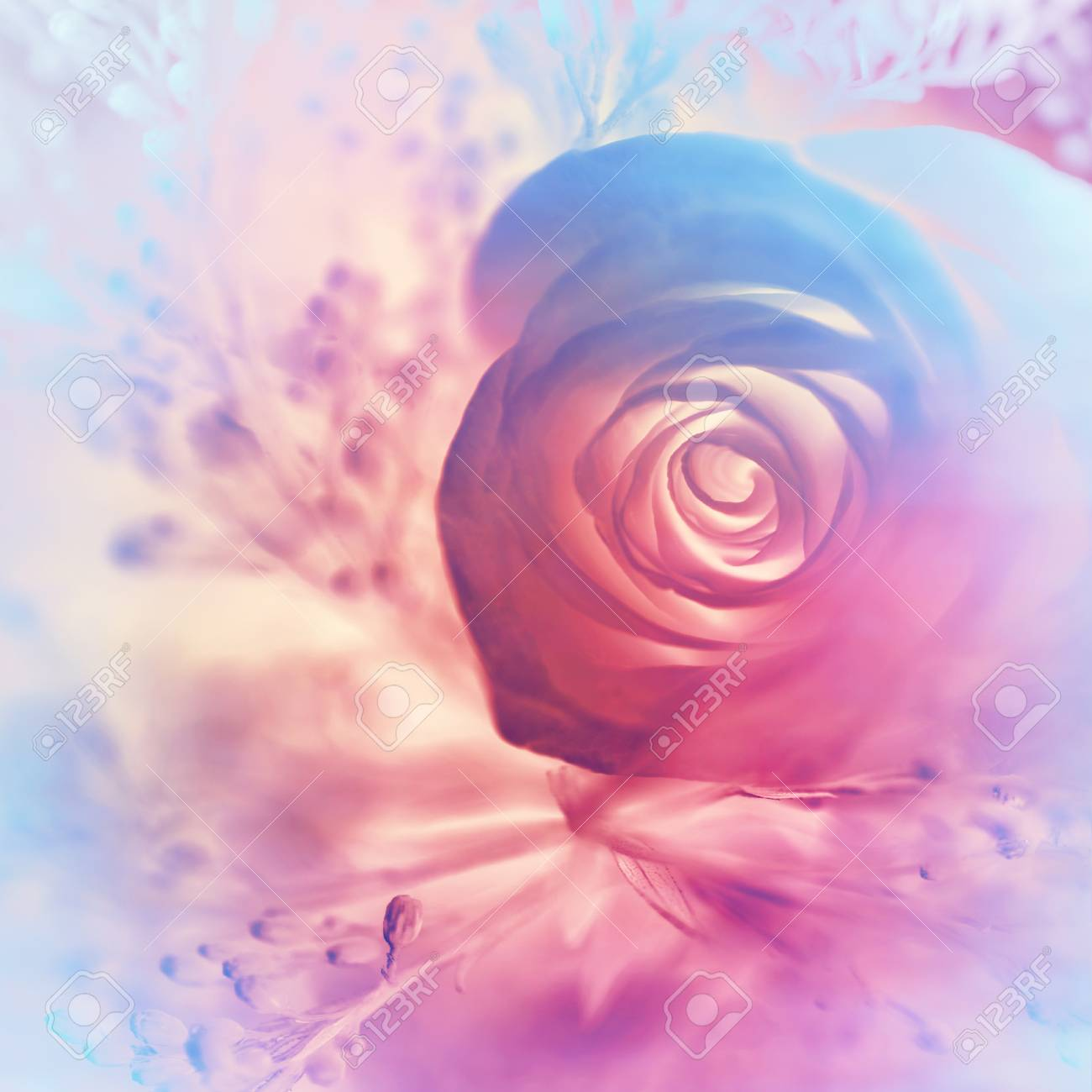 Dreamy Rose Background Abstract Pink And Purple Floral Wallpaper
