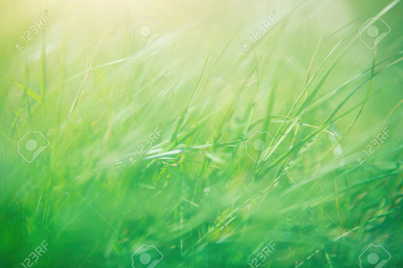 Green Grass Abstract Background Spring Sunny Day Shallow Depth Of Field Beautiful Natural