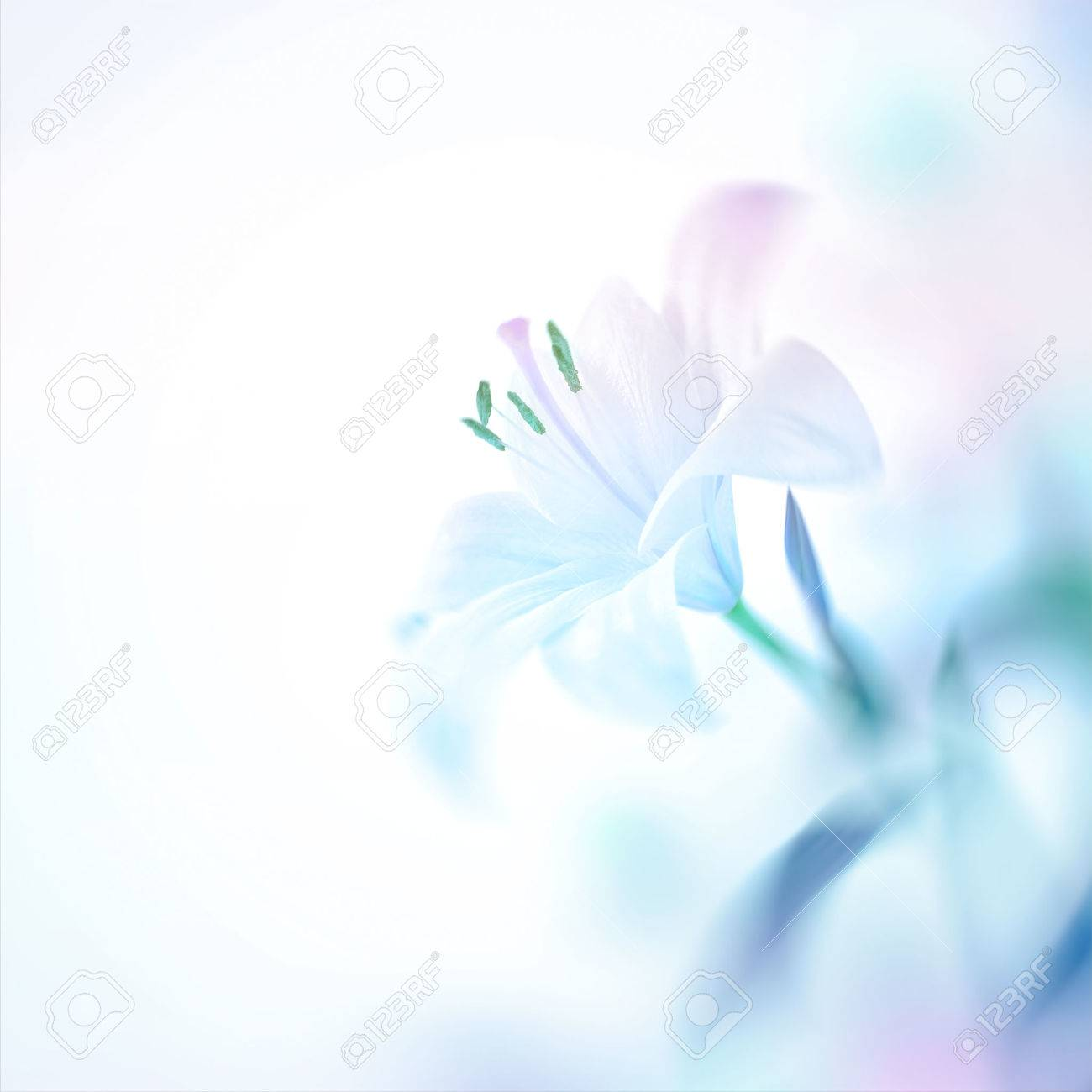 Closeup photo of a beautiful gentle white lily flower, nice floral background with copy space, elegant invitation for a wedding day - 68289226