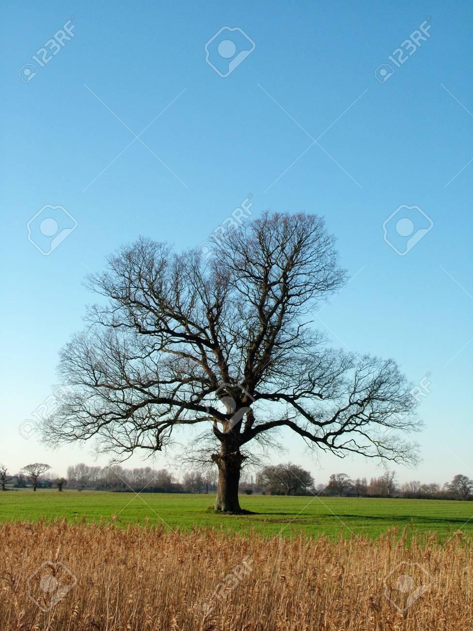 tree Stock Photo - 697606