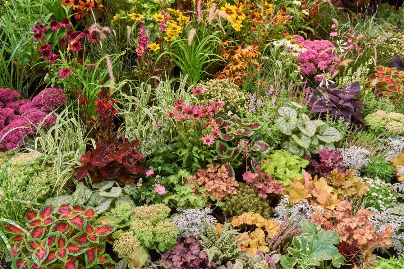 Variété de fleurs de jardin et de plantes en arrière-plan
