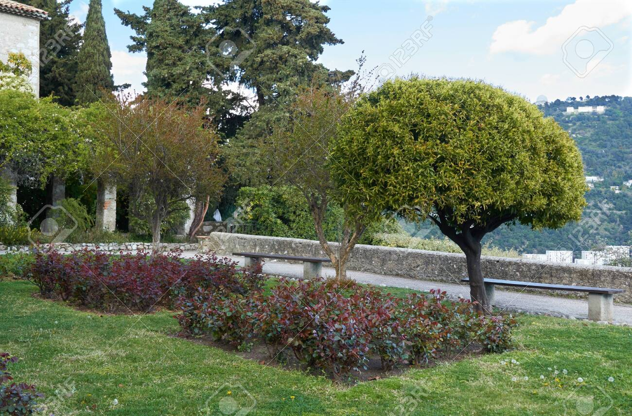 Beautiful Small Trees In The Monastere De Cimiez Garden In Nice