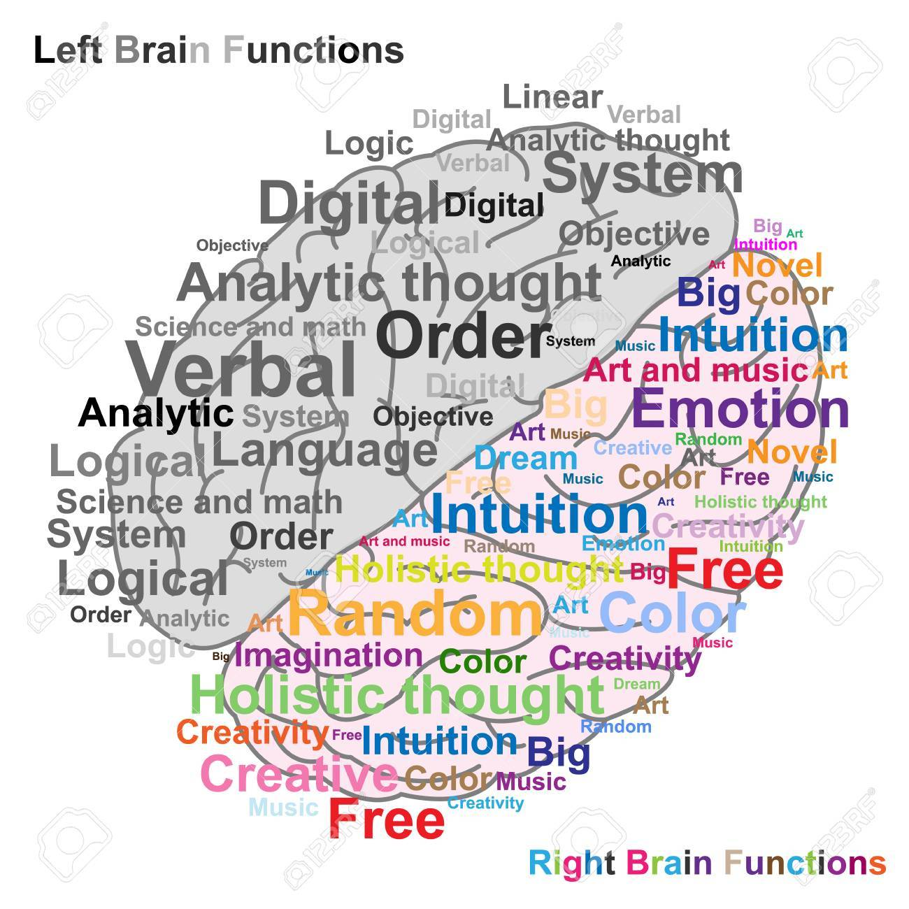 Left And Right Brain Function Illustration Royalty Free Cliparts ...