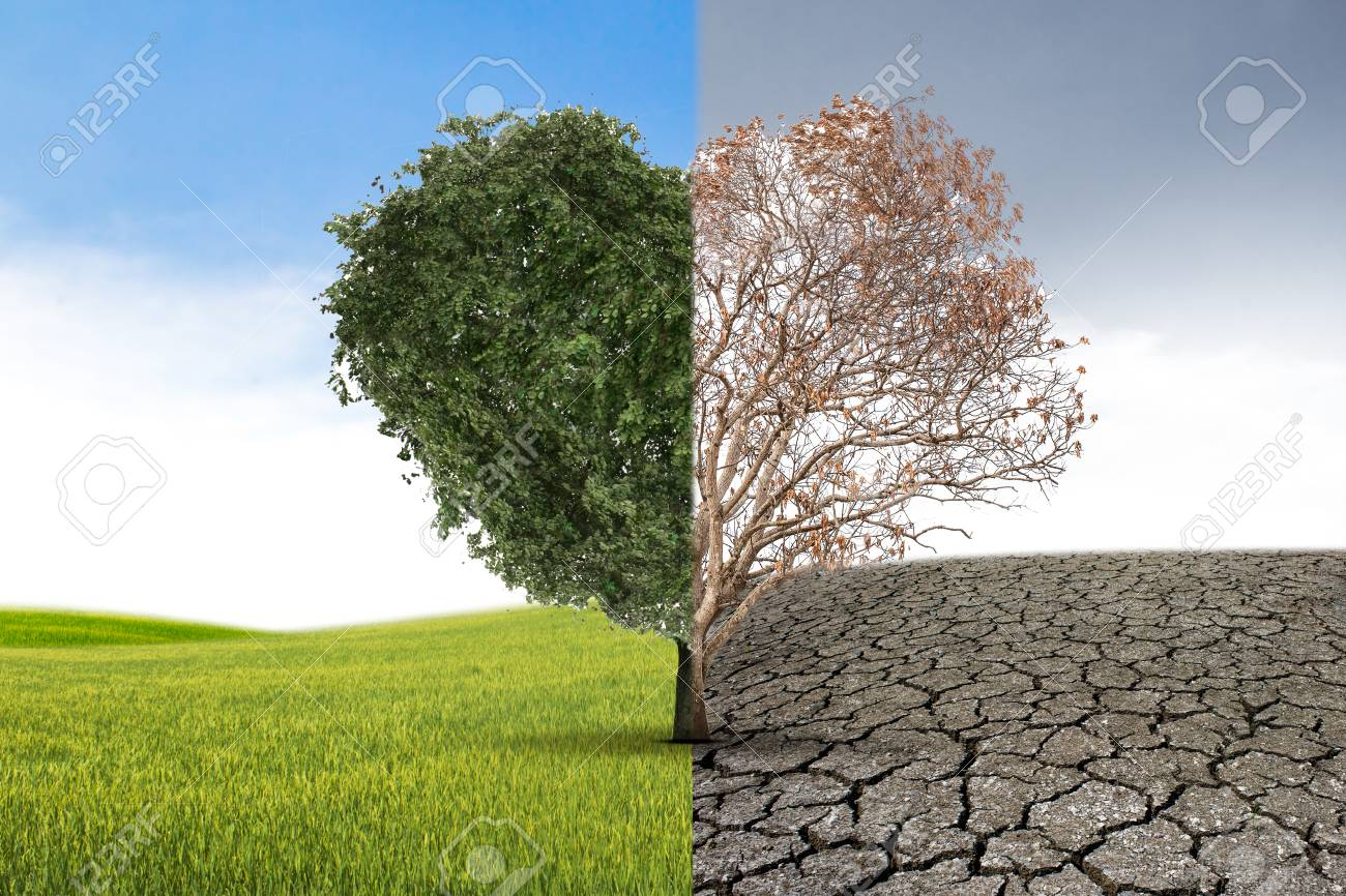 Tree Heart Death In Half Concept Of Climate Has Changed Half