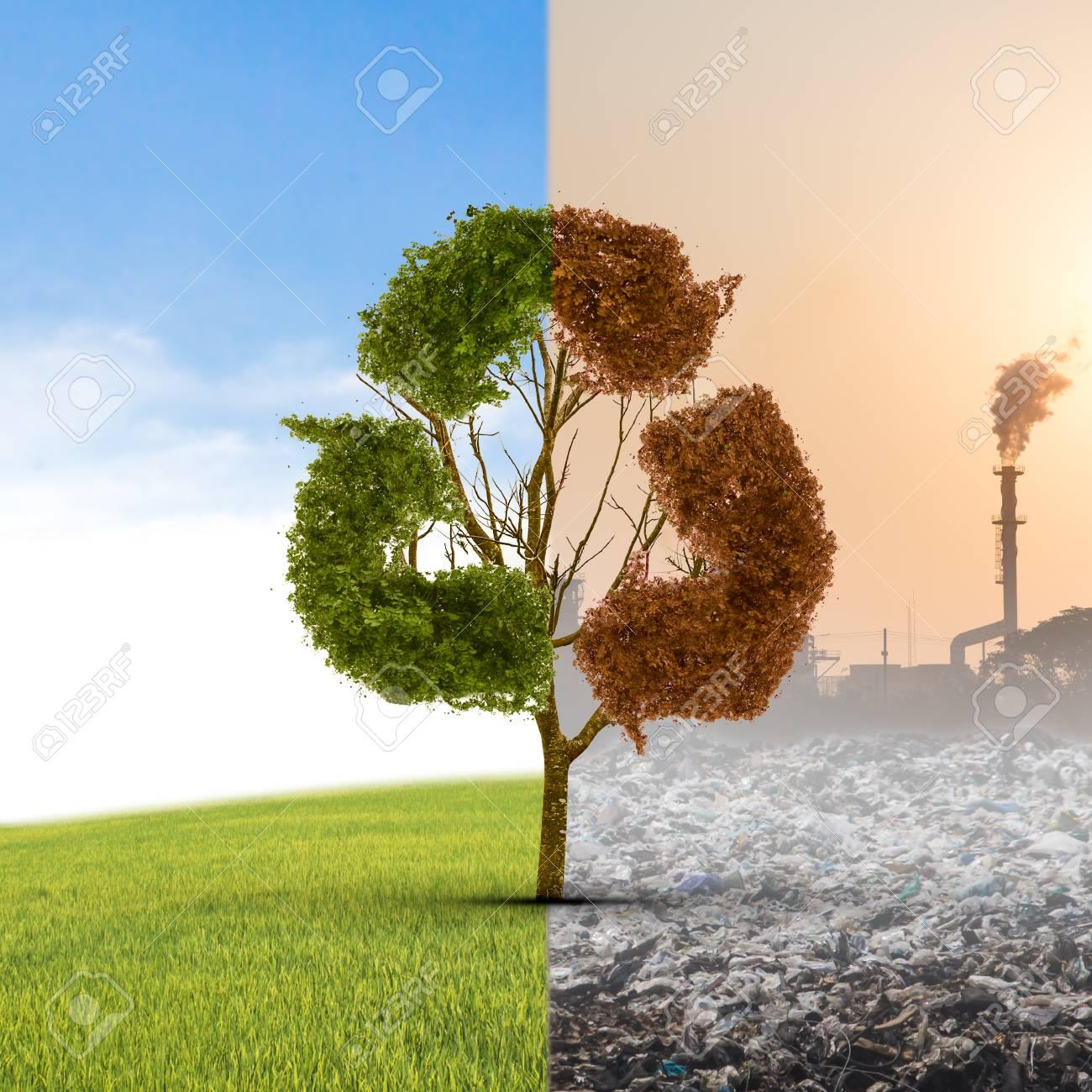 El Concepto De Clima Ha Cambiado.  Medio Vivo Y Medio árbol Muerto De Pie En La Encrucijada.  Salvar El Medio Ambiente.  Fotos, Retratos, Images Y Fotografía De Archivo Libres De Derecho.  Immagine