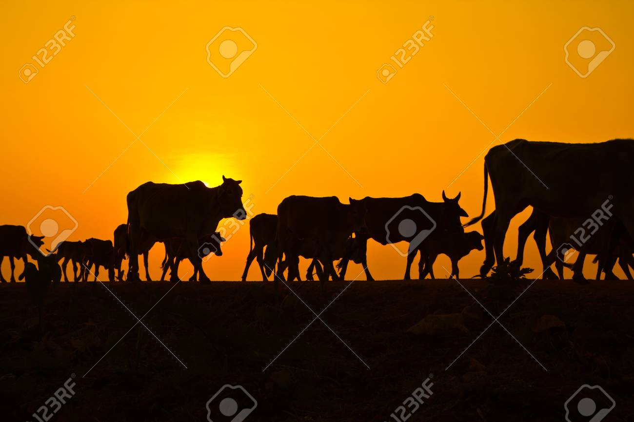 sunset countryside thailand Stock Photo - 13427159