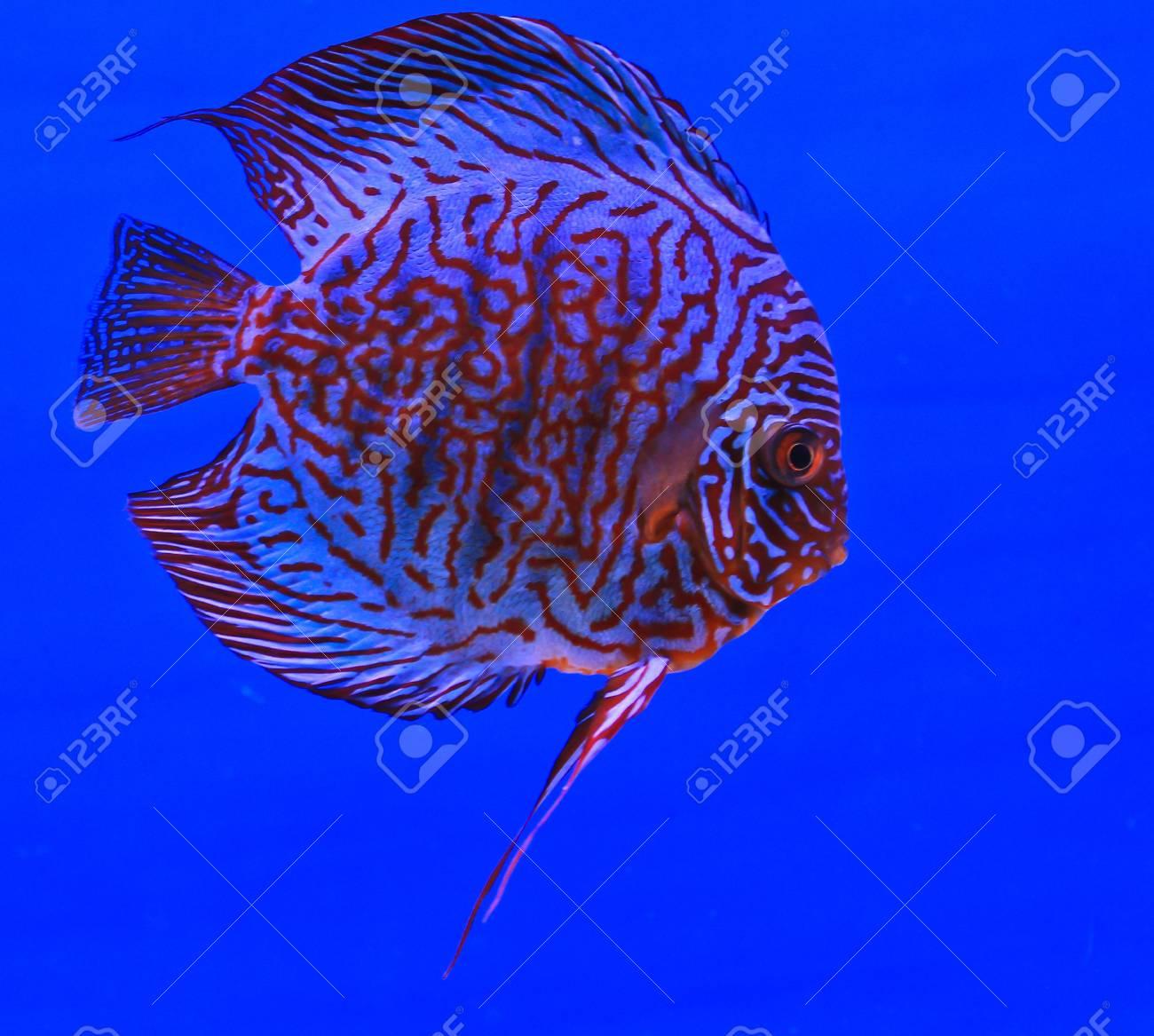 Fish in the aquarium glass Stock Photo - 13694150