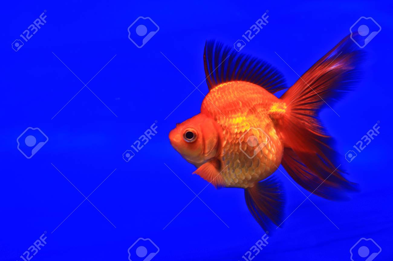 Fish in the aquarium glass Stock Photo - 13695881