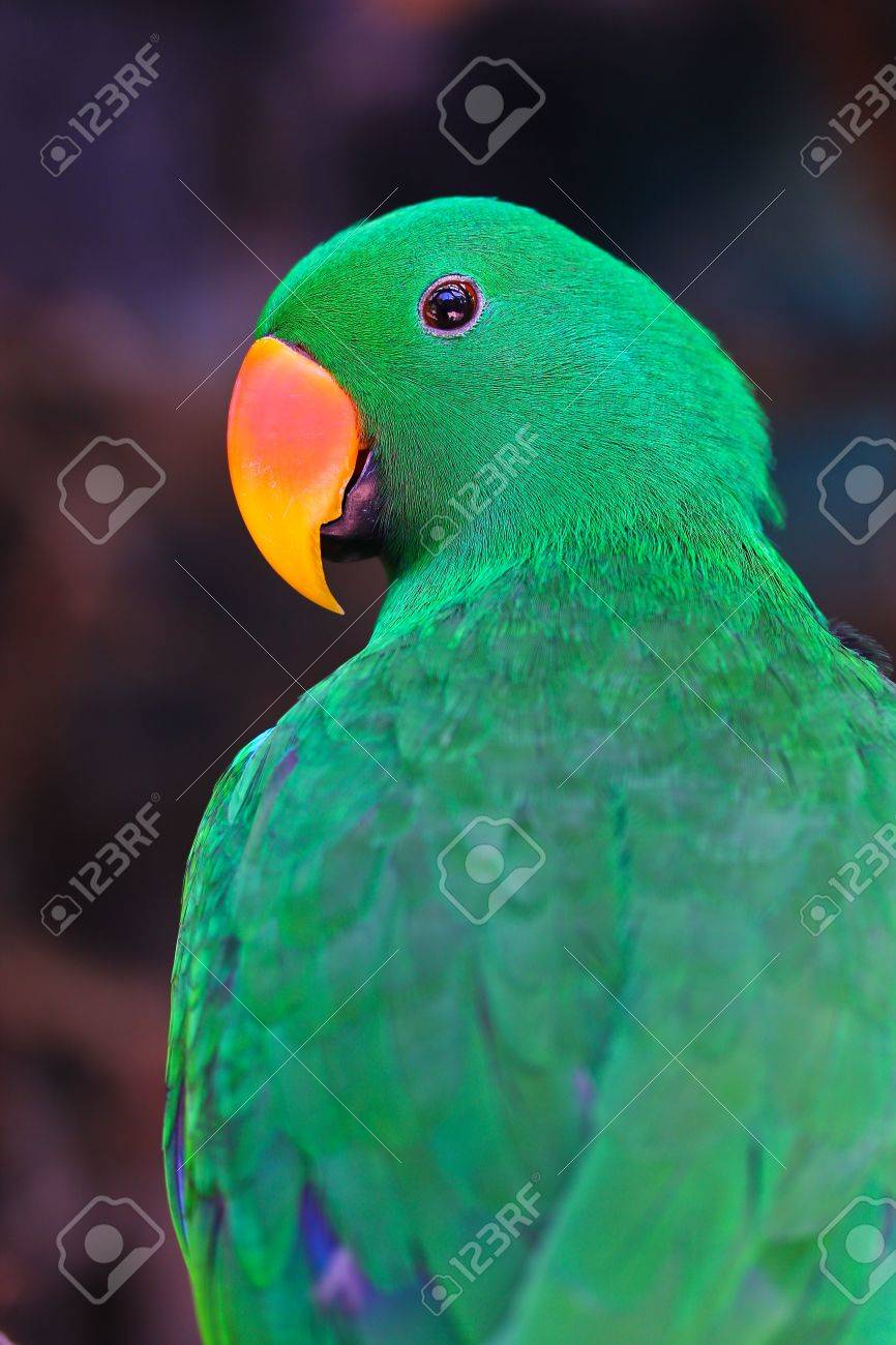 Nice parrot with a lot of green colours in zoo Stock Photo - 15188591