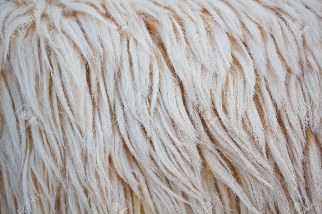 close up sheepskin texture background Stock Photo - 16320960