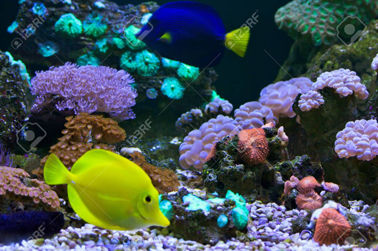aquarium  Coral Stock Photo - 18425390
