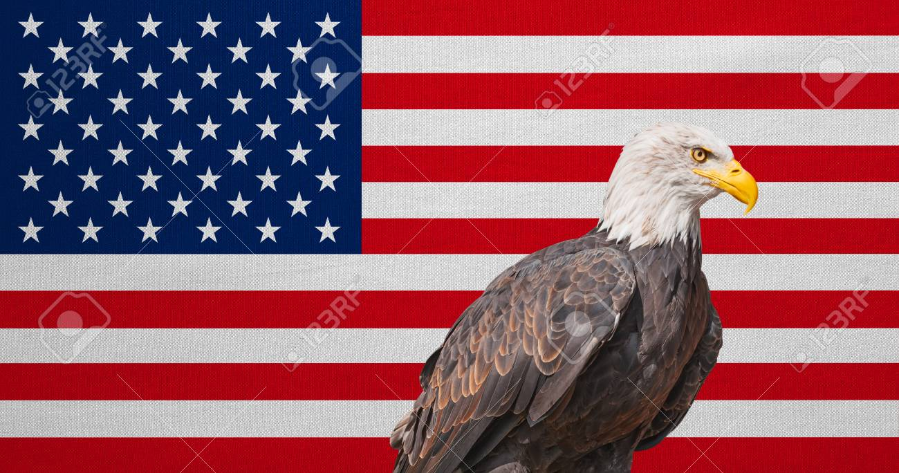 American Flag And Bald Eagle National Symbols Of Usa Patriotic