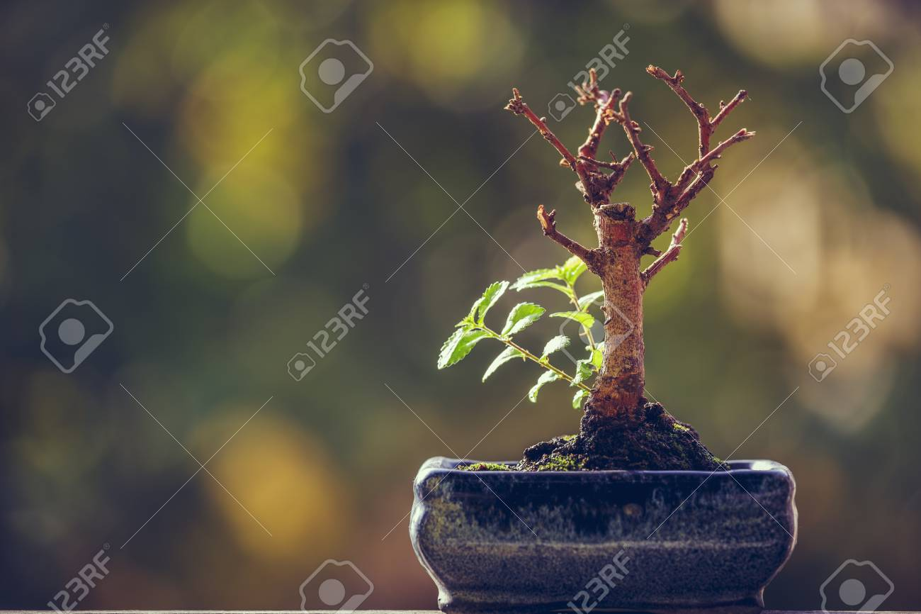 Dry bonsai tree trunk in a pot with fresh green sprigs over blurred natural background with copy space. Nature revival power. Resilience concept. Life triumph. - 83786018