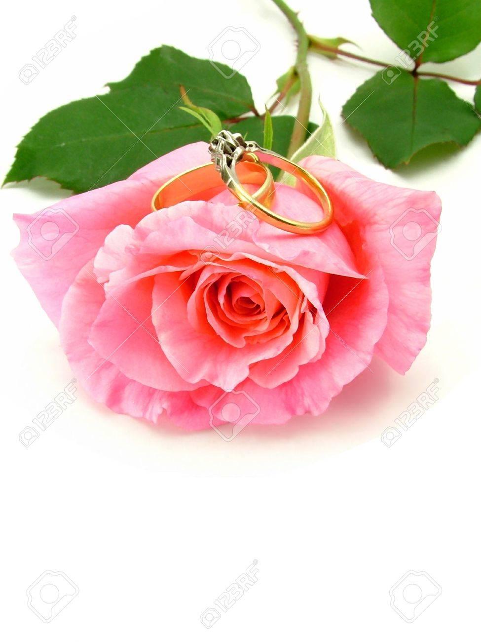 Wedding Rings Pictures: wedding rings on single rose petal