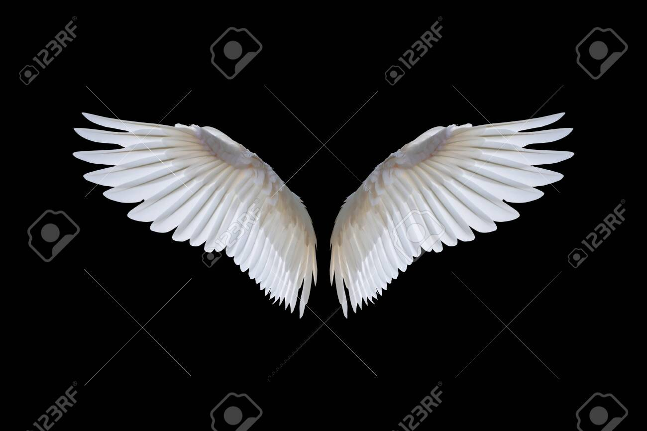 White angel wings isolated on a black - 135620699
