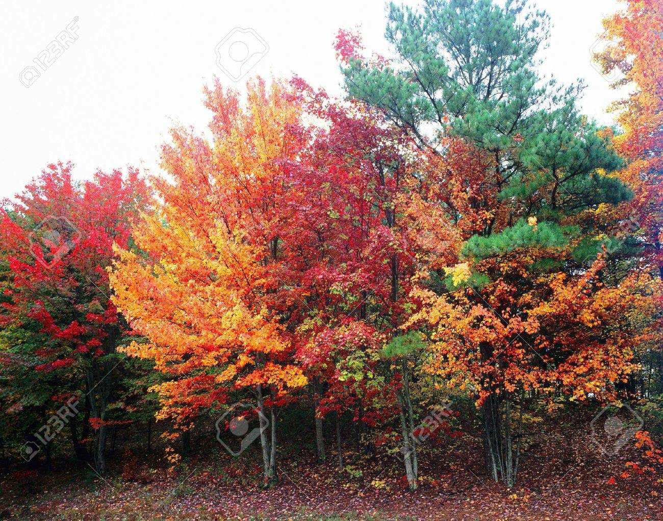 Fall Foliage in Tennessee Stock Photo - 2598925