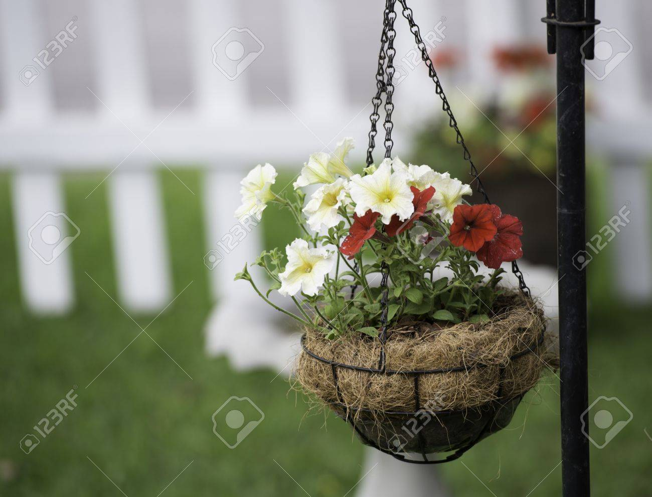 Red and Yellow Petunias in a Hanging Basket Stock Photo - 19759461