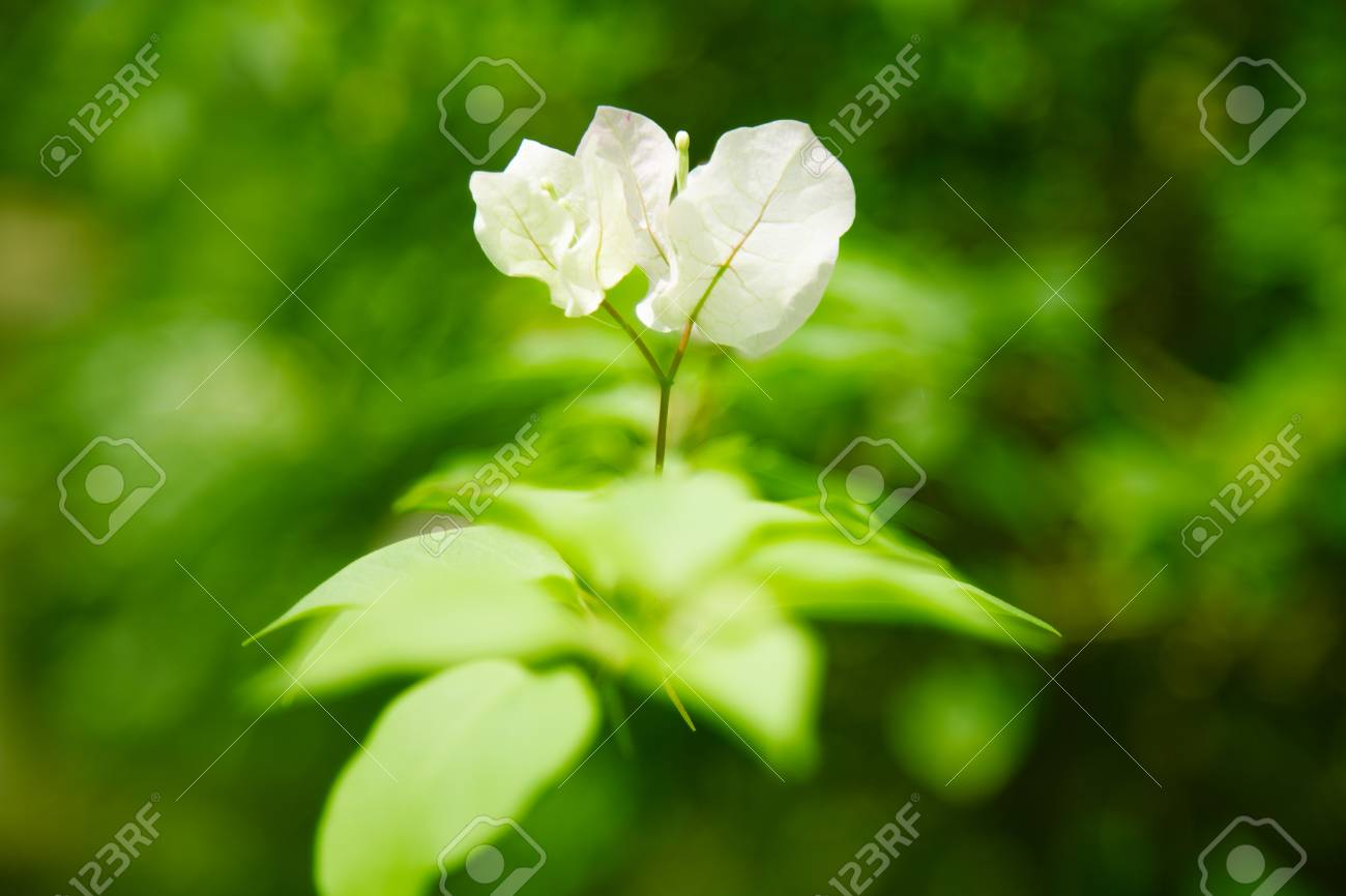 Fleur Tropicale Blanche Sur Un Fond Flou De Feuilles Vertes Banque
