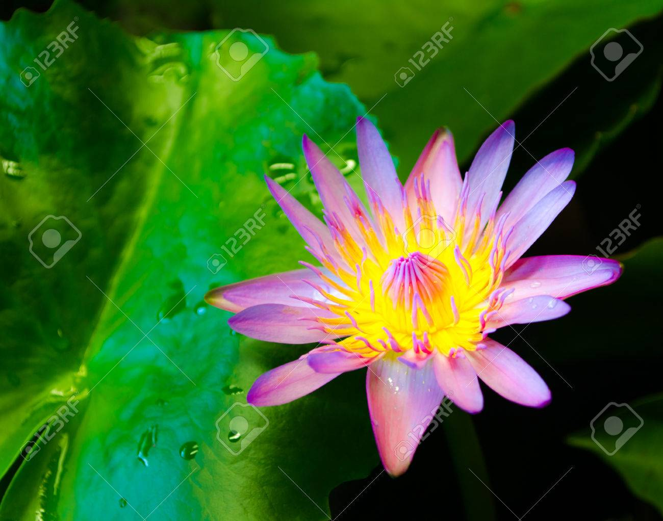 Lotus flower fairy korean drama choice image flower decoration ideas lotus flower fairy best flower 2017 lotus flower fairy closed by oktiger on deviantart mightylinksfo choice mightylinksfo Gallery