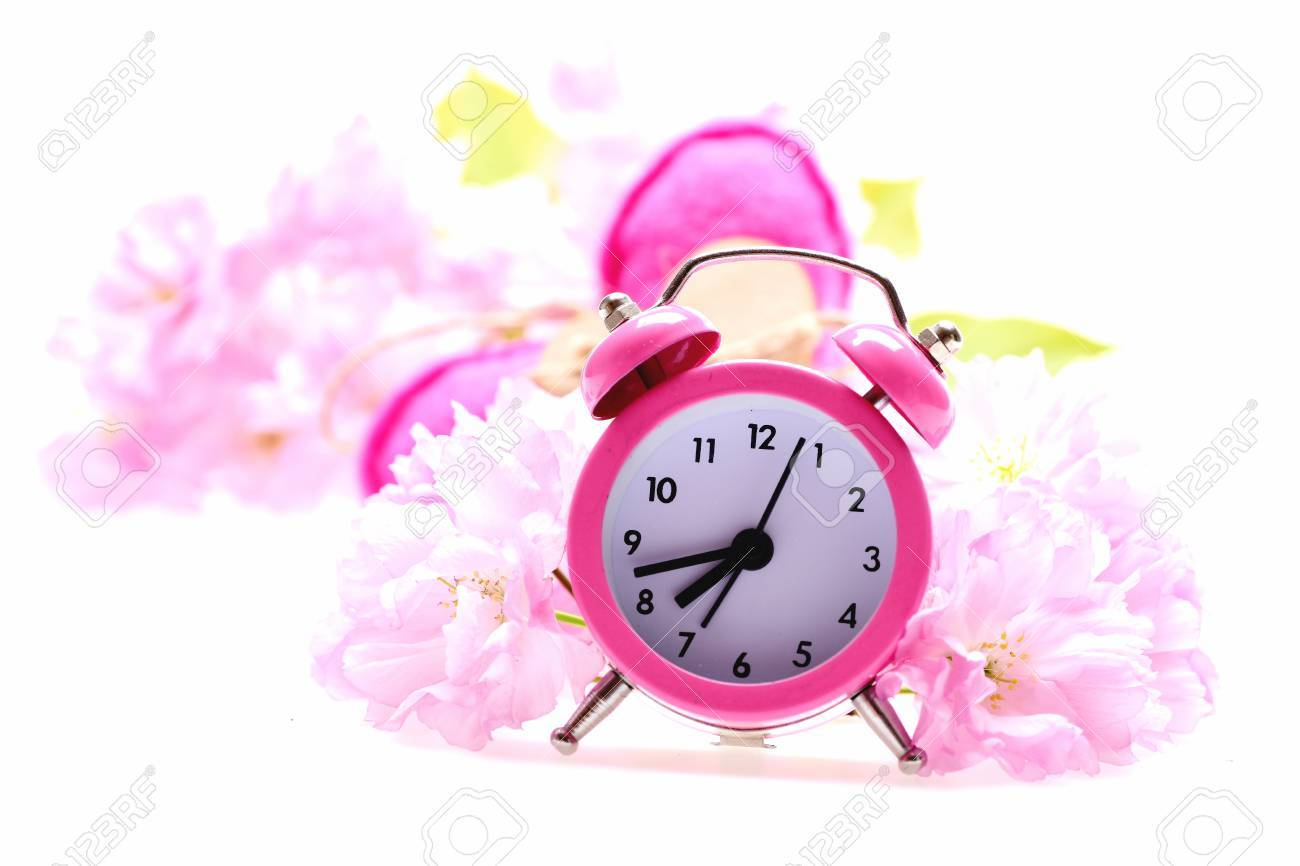 c0131d37ac6da5 Spring time and love composition. Pink retro alarm clock and japanese  cherry blossom with pink