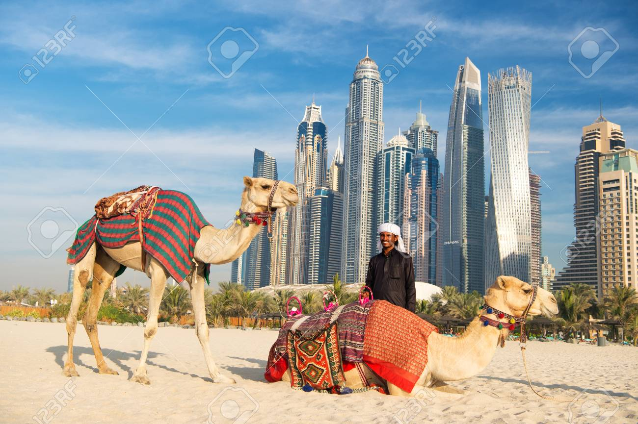Dubai uae december 26 2017 camels on skyscrapers background dubai uae december 26 2017 camels on skyscrapers background at the beach altavistaventures Choice Image