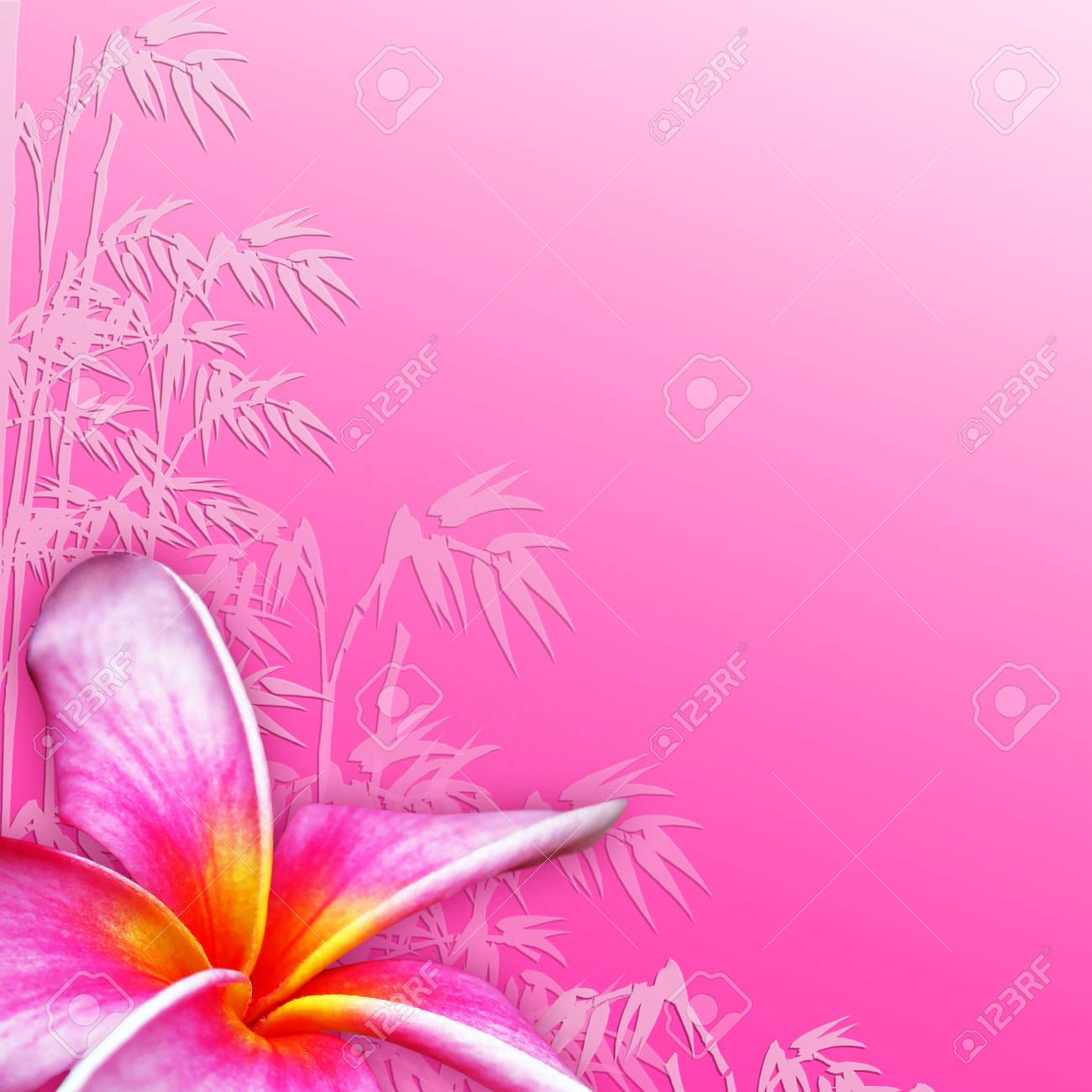 Plumeria Fiore Tropicale Su Sfondo Rosa Con Foglie Di Bambù