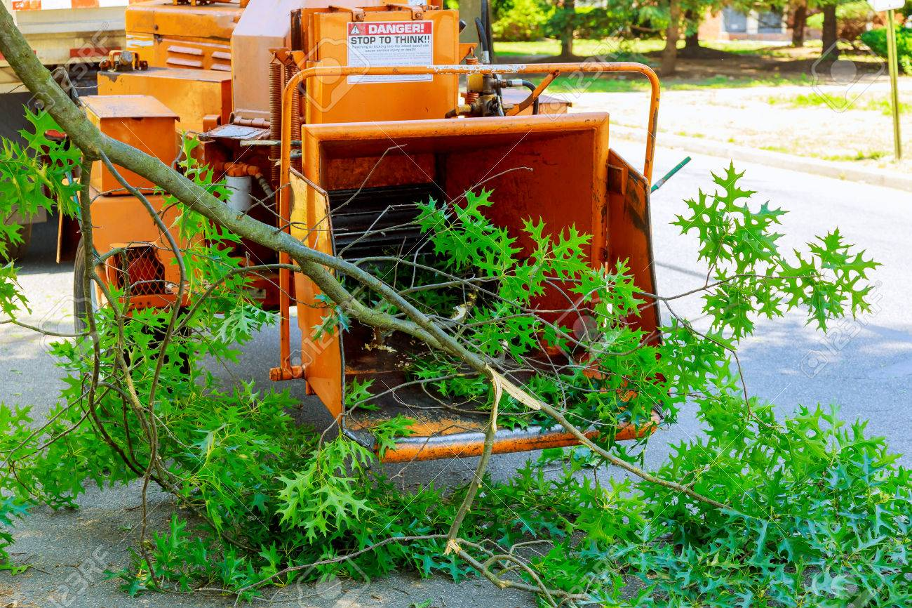 Landscapers using chipper machine to remove and haul chainsaw tree branches - 80820721