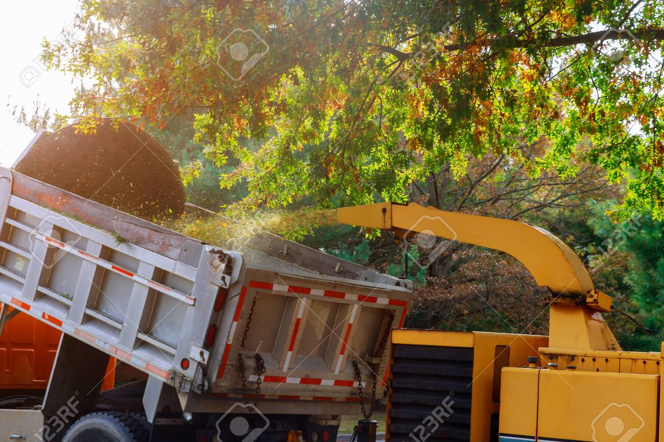 Wood chipper blowing tree branches cut a portable machine used for reducing wood into the back of a truck. - 132605912