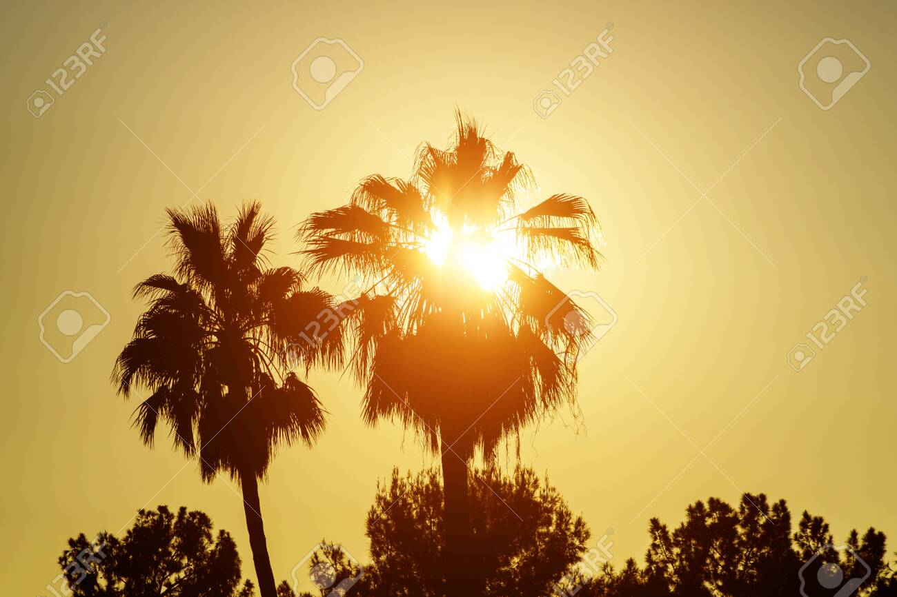 Palm trees silhouettes on tropical sunset time USA, Hawaii - 140620895