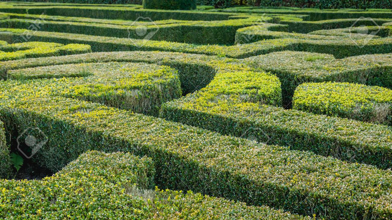 Formal French Garden With Shaped Boxwood Bushes Stock Photo, Picture on