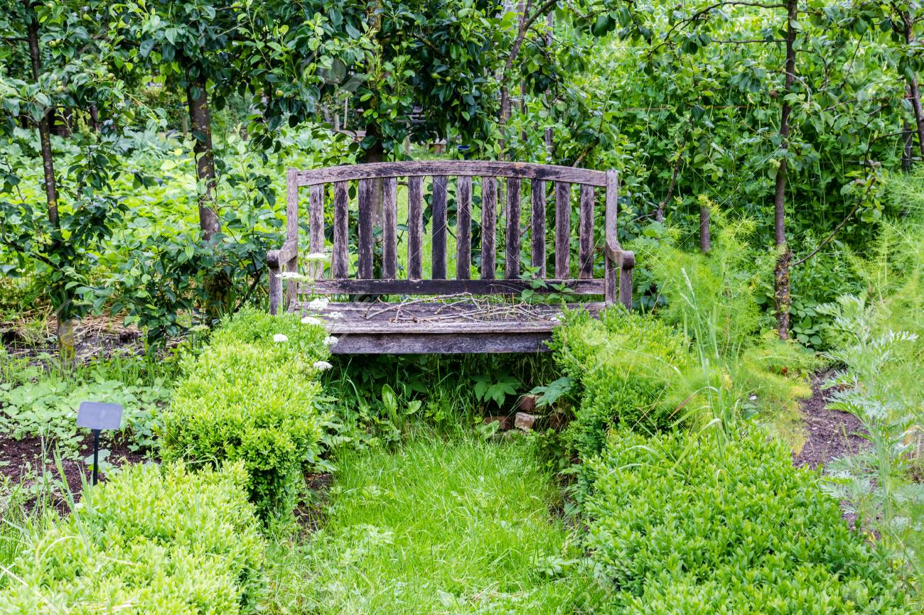 Incredible A Wooden Bench In The Center Of An Urban Vegetable Garden Growing Gmtry Best Dining Table And Chair Ideas Images Gmtryco