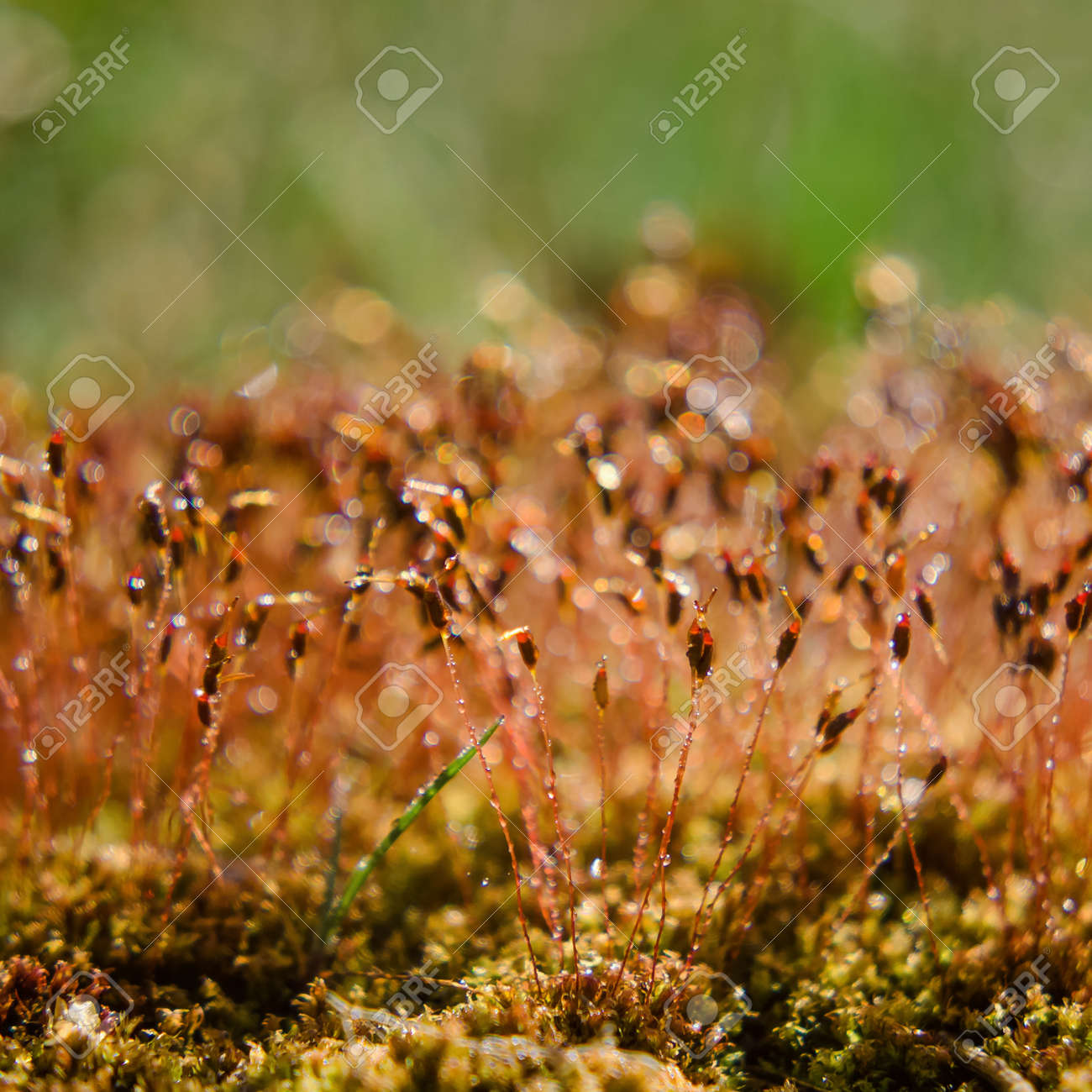 BLOOMING MOSS - A forest glade in the rays of the sun - 168070523