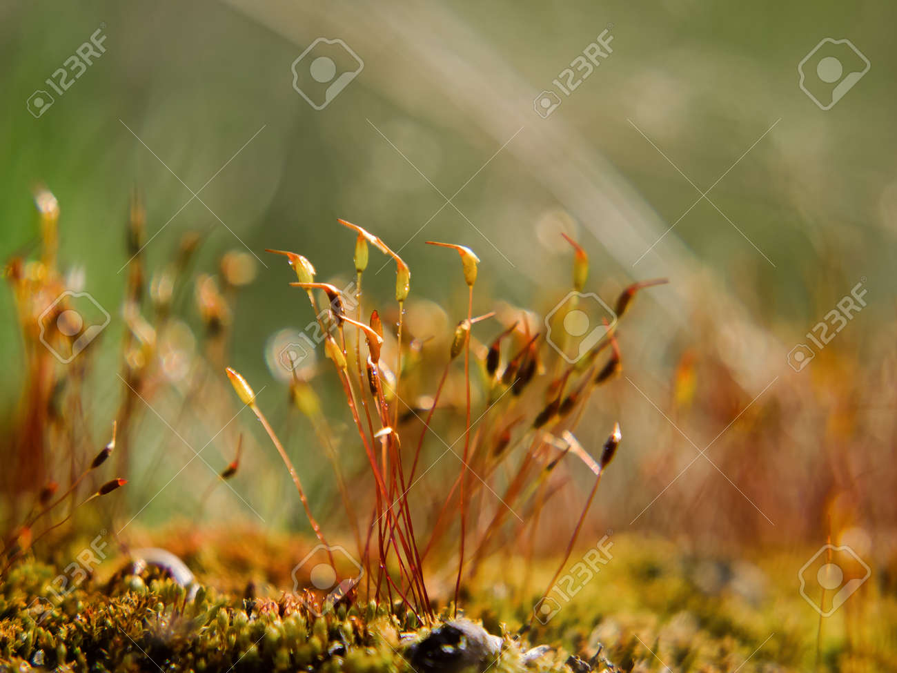 BLOOMING MOSS - A forest glade in the rays of the sun - 168070521